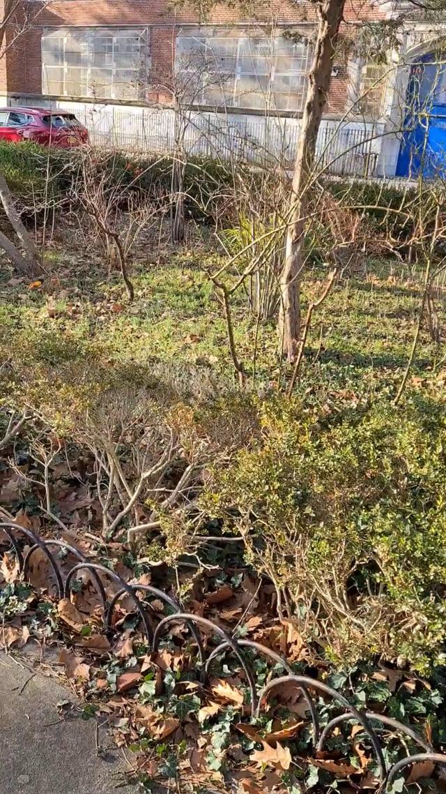 Crocheron Garden Bed now... dead shrubs, empty space, and weeds.