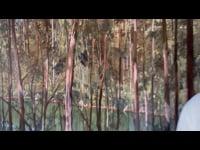 Black Cockatoos and the Blackwood