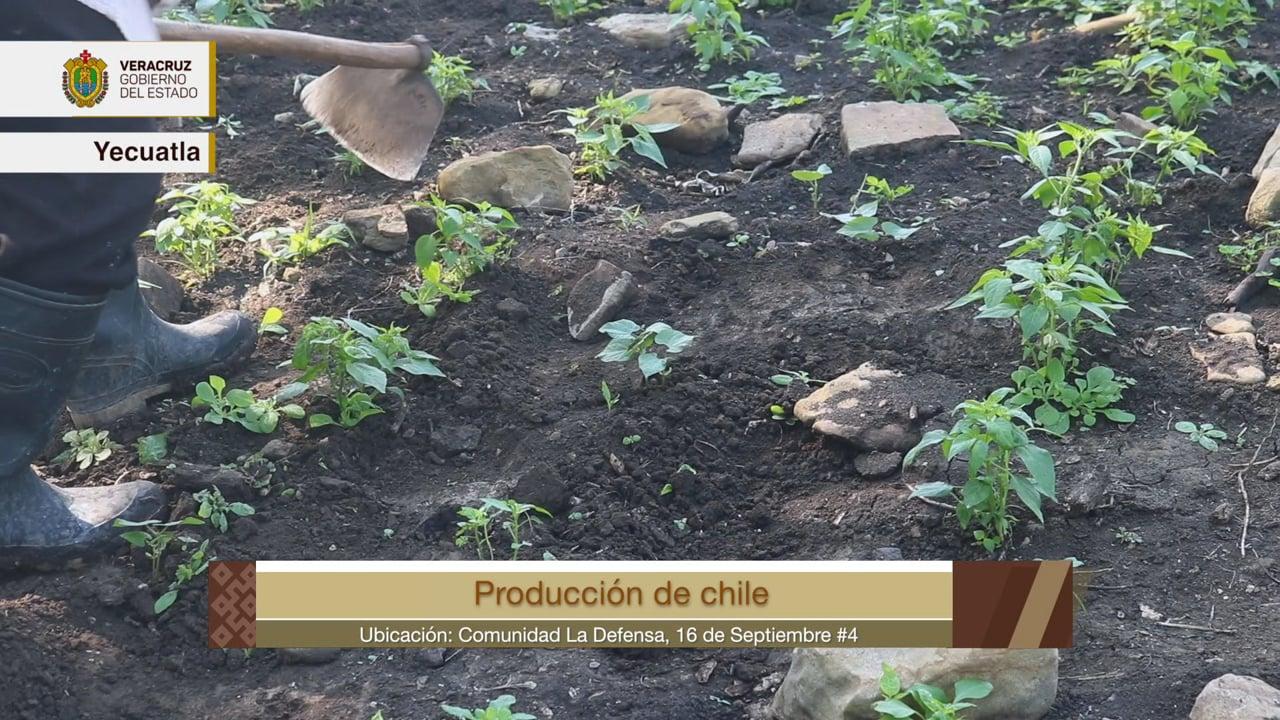 Orgullo Veracruzano: Yecuatla