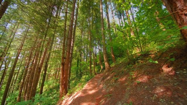 May Creek Park, Newcastle, Washington State - Virtual Forest Walk-Short Video