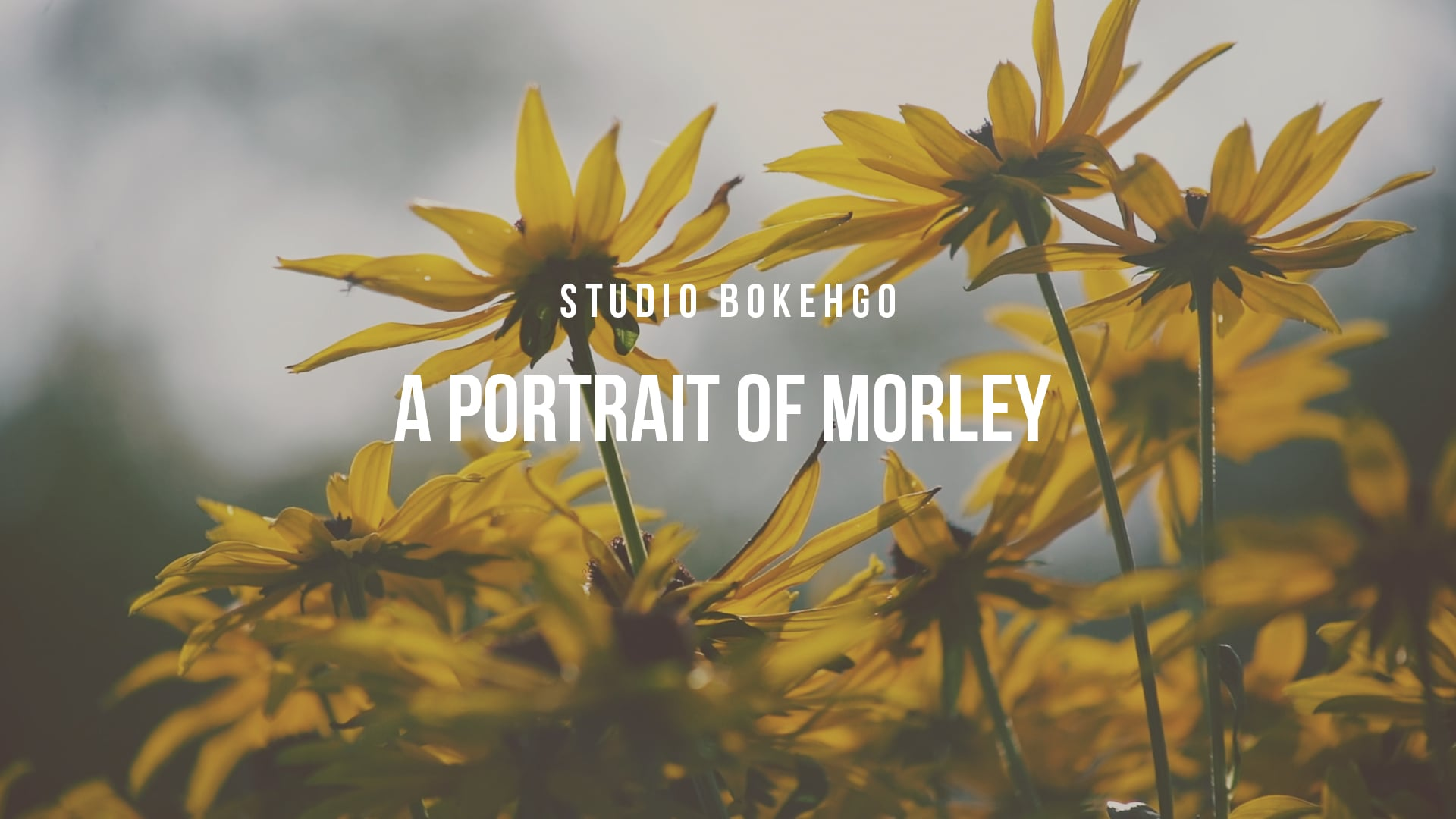 The Morley Arts Festival Film 2020 - Studio Bokehgo