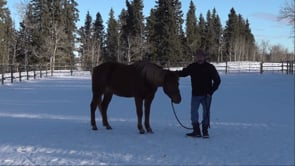 4 Different Horses, 4 Different Progressions - Part I