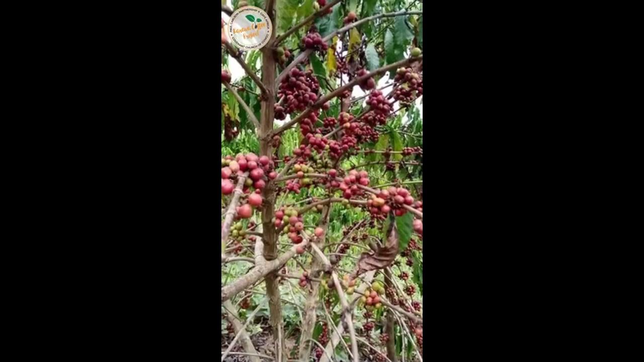 Karawa coffee is on its way to Chicago!