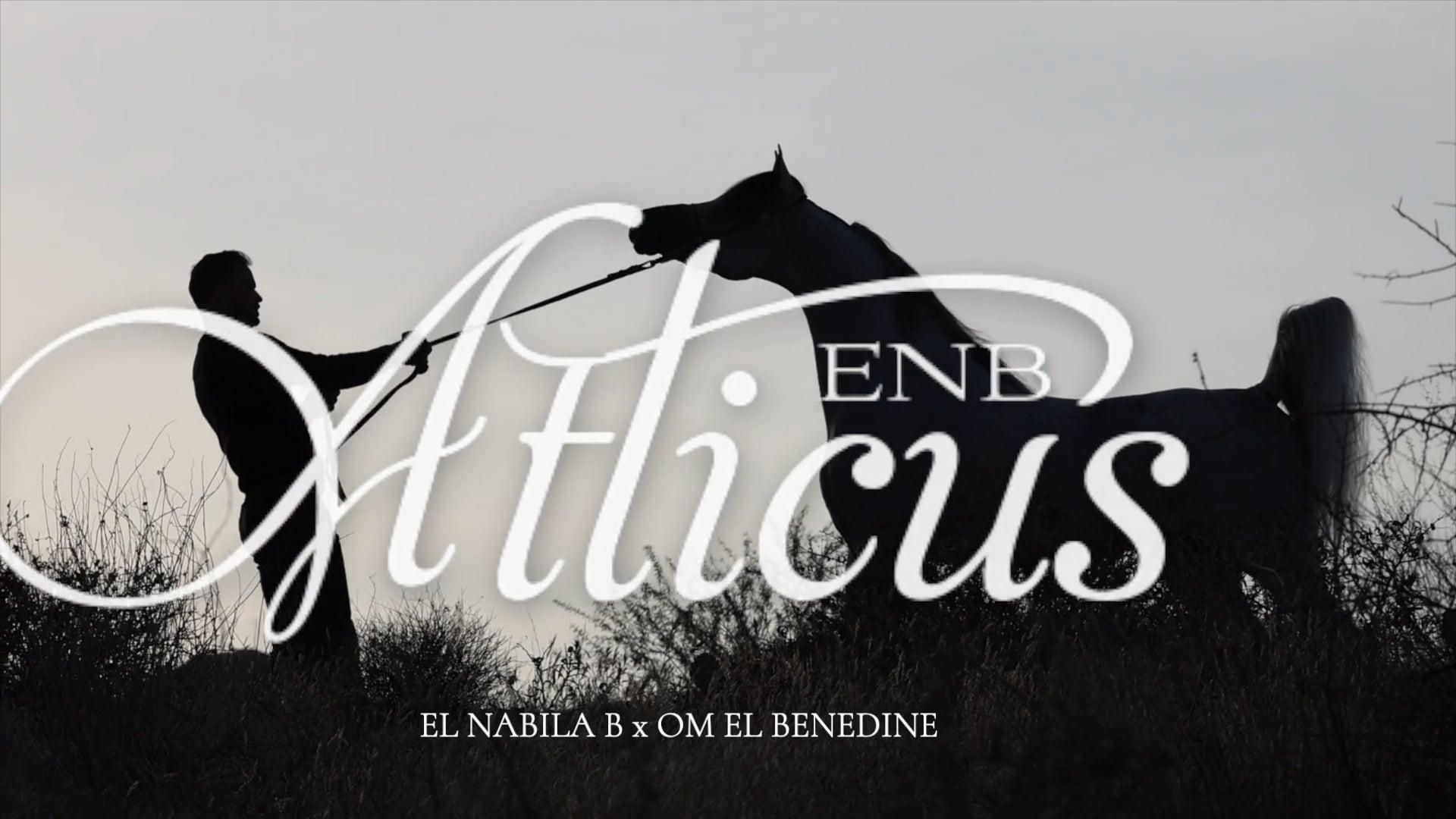 Atticus ENB