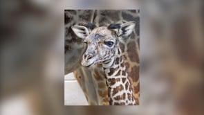 New Babies at Zoo