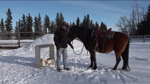 First Saddling - Saddle Issues