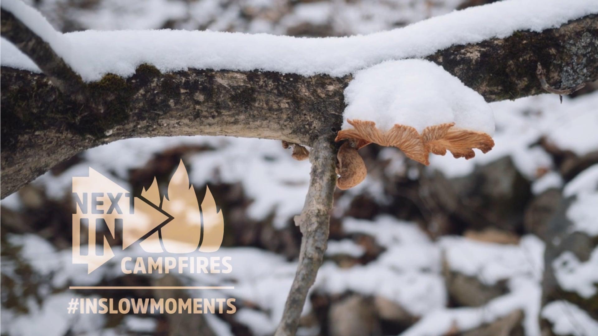 Next Indiana Campfires Slow Moments