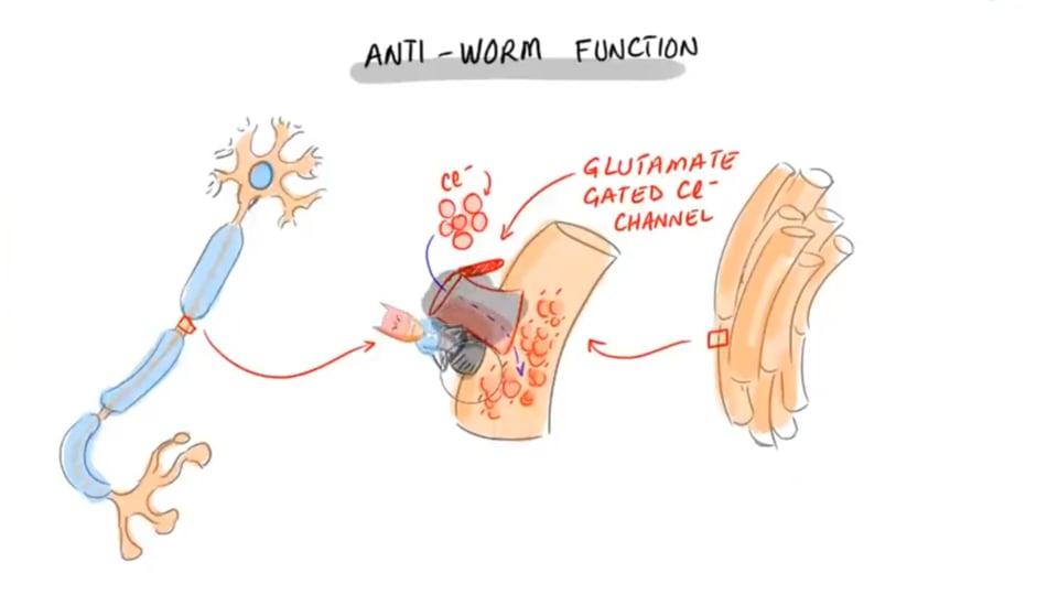 Ivermectin Mechanism of Action