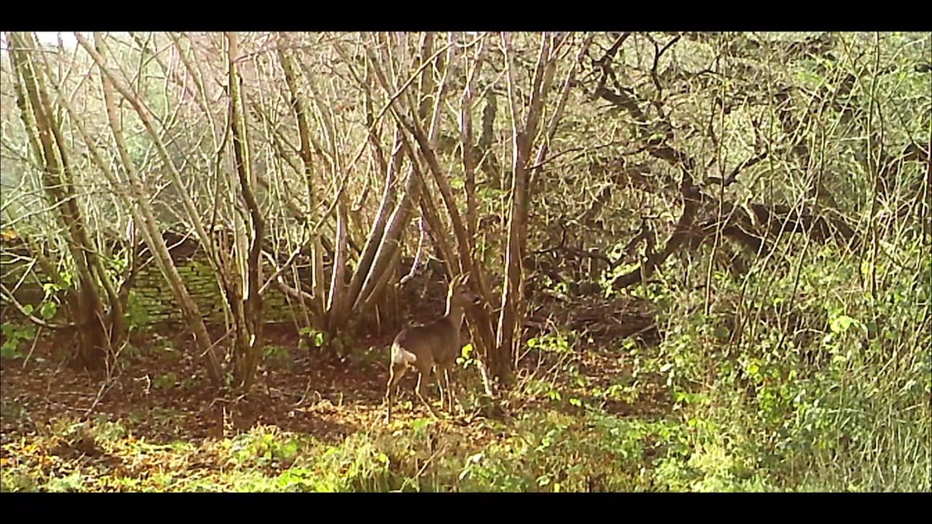 Trail Cam - Social Media