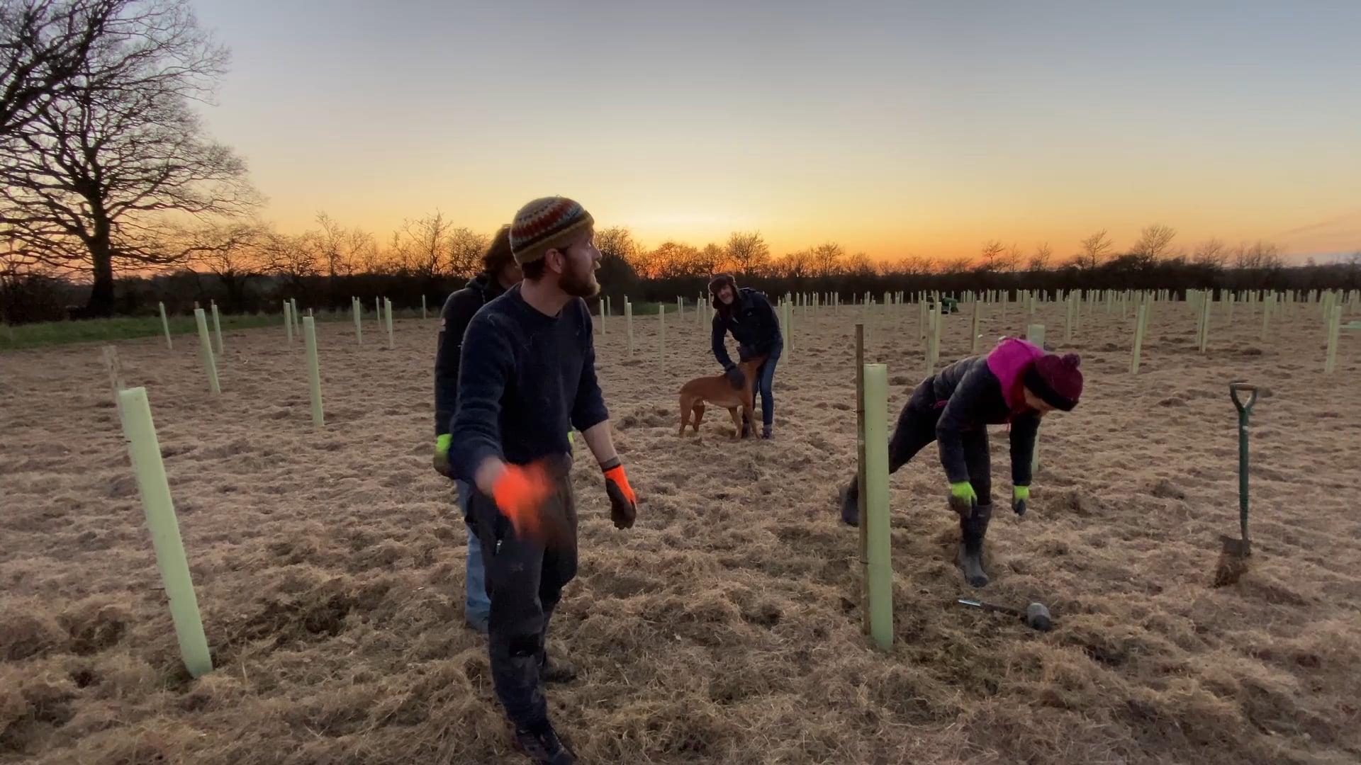 Ninebarrow Woodland Update - Saturday 6th March