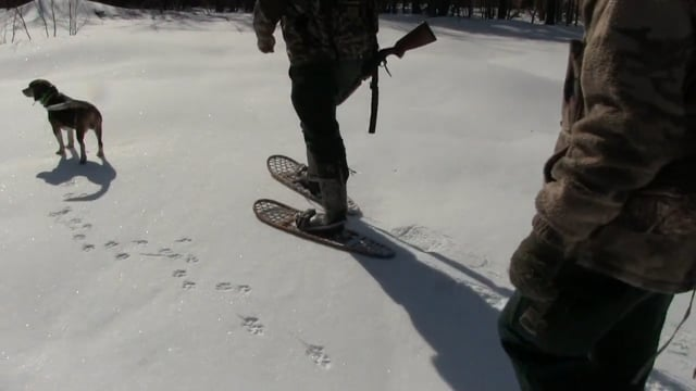 Dave Laskey Teaches the Ropes of Rabbit Hunting in Vermont