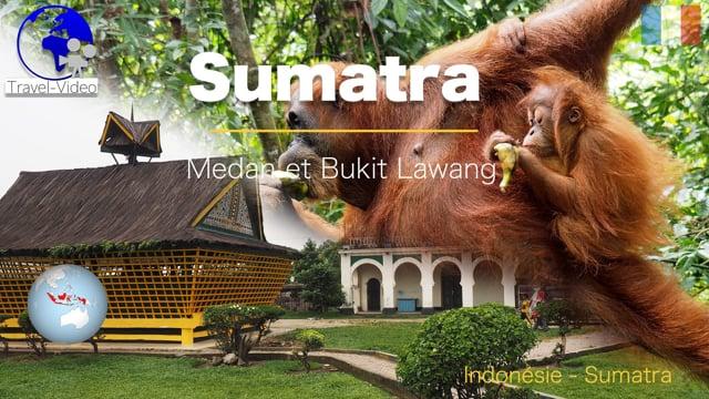 Indonésie • Sumatra • Medan et le sanctuaire des orang outang (FR)