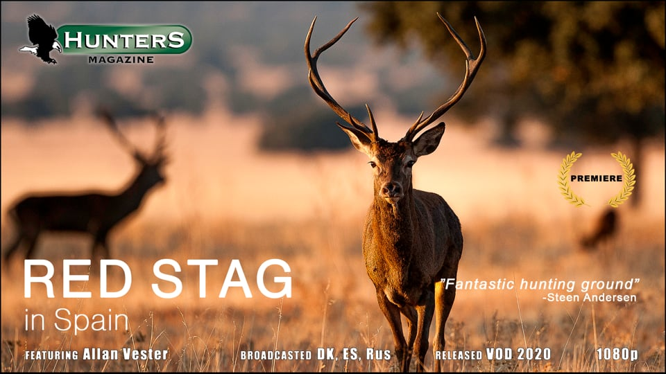 Red stag in Spain