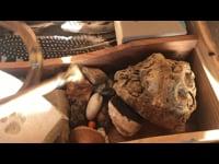 magic box at the wooden hut