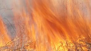 Waco Wetlands Prescribed Burn