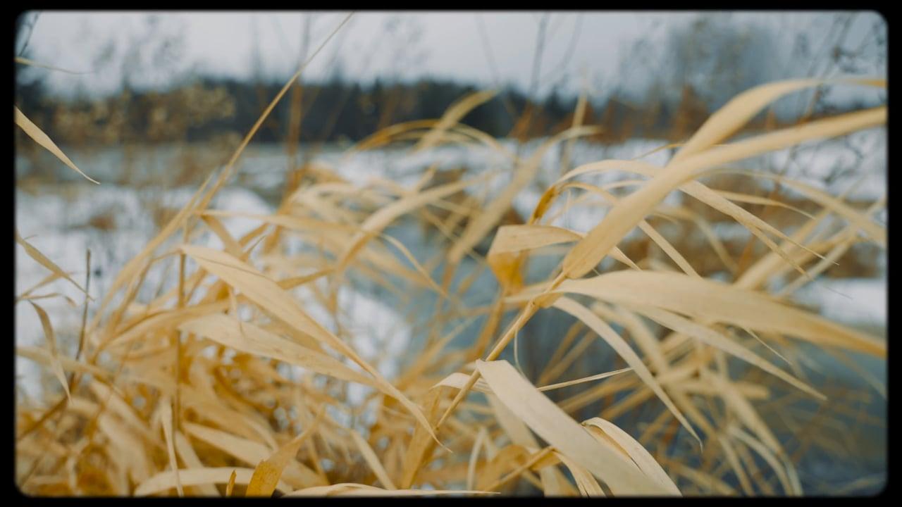 Winter's Colour Palette
