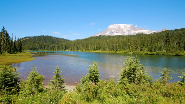 Summer Allure of Reflection Lake, Mount Rainier Area - Nature Relax Video in 4K HDR