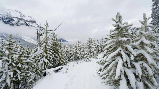 Scenic Nature Trails of Canada. Wintertime. Part 2