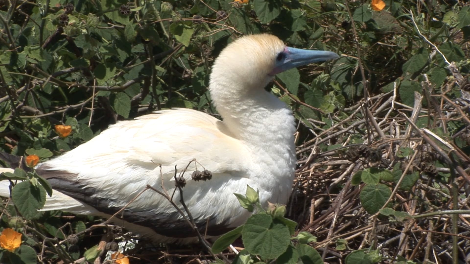 Seabirds and Plastic Pollution
