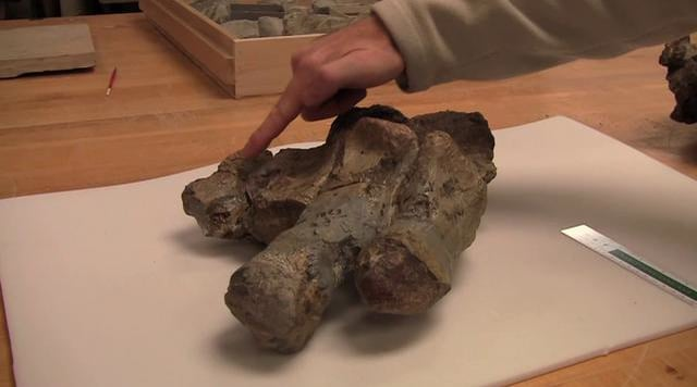 More about Glacialisaurus Fossils – Antarctica Video Report #3