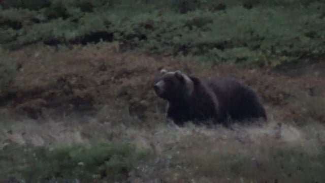 Alaska Southern Peninsula Brown Bear Hunt w/ Nathan, Part 2