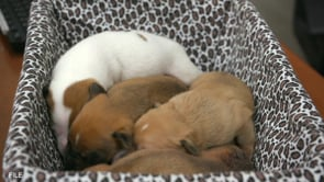 Animal Shelter Numbers Rising Since Winter Storm