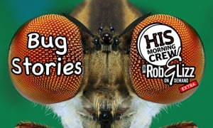 Rob & Lizz On Demand EXTRA: Bug Stories