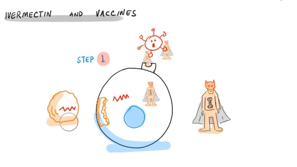 Will Ivermectin Block a Vaccine?
