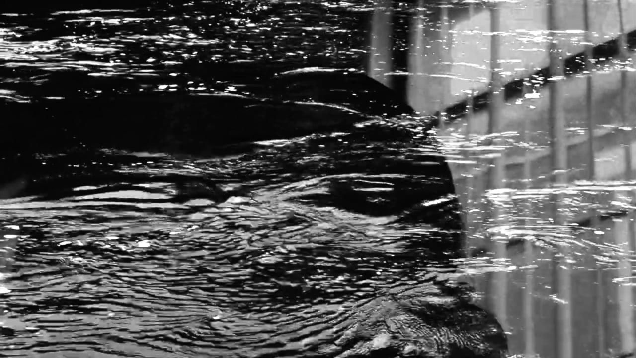 Santuario (Citizen Miriam), a video by Taylor Jospeh McKinley