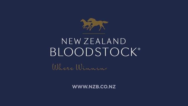 NZB Online Bidding Tutorial