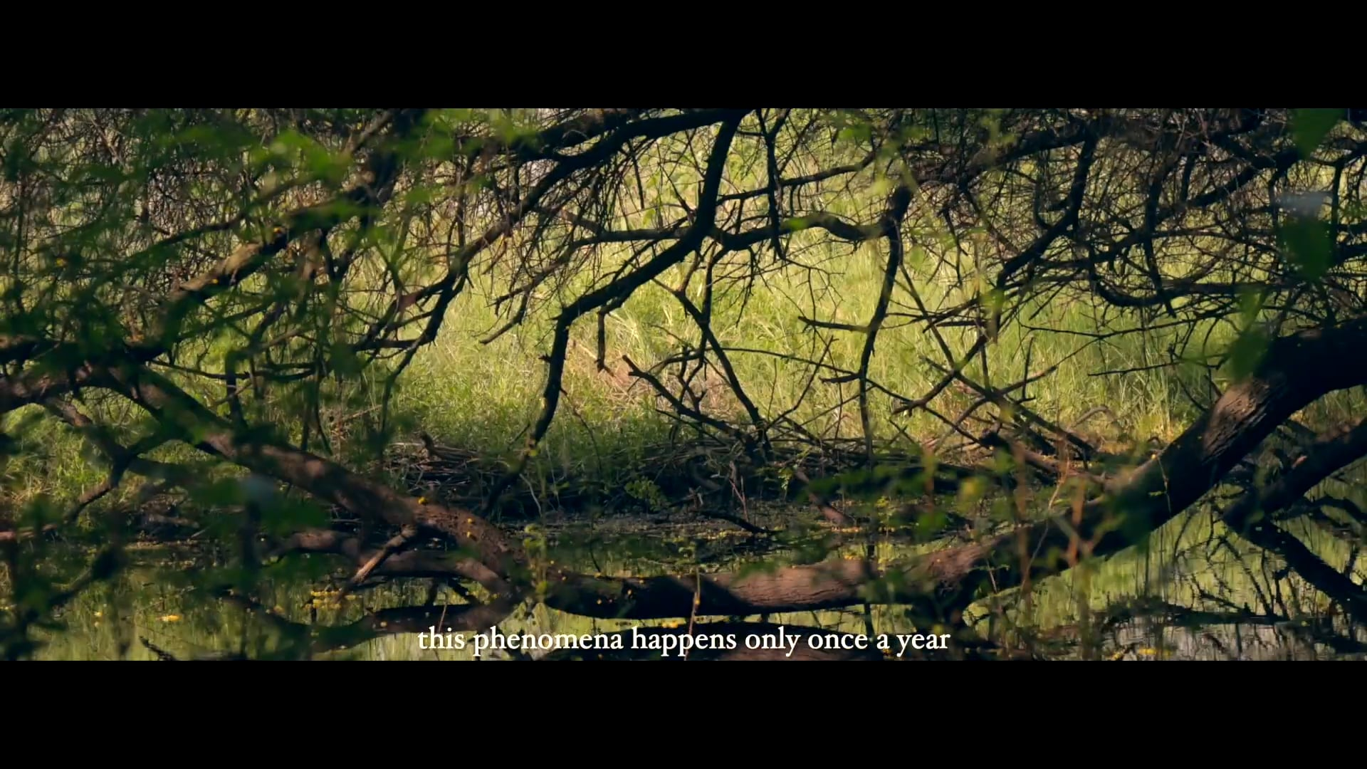 Song of the SoulBirds / Bharatpur Bird Sanctuary