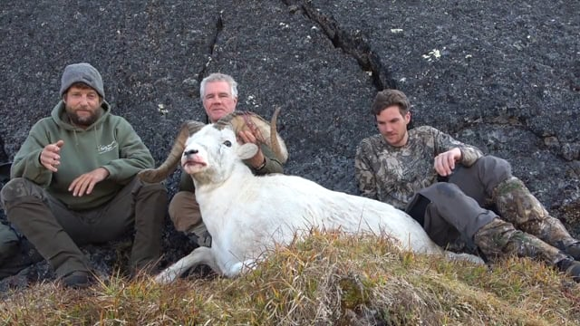 Alaska Dall Sheep Hunting 2020