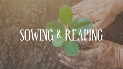 Day 26 - Sowing & Reaping