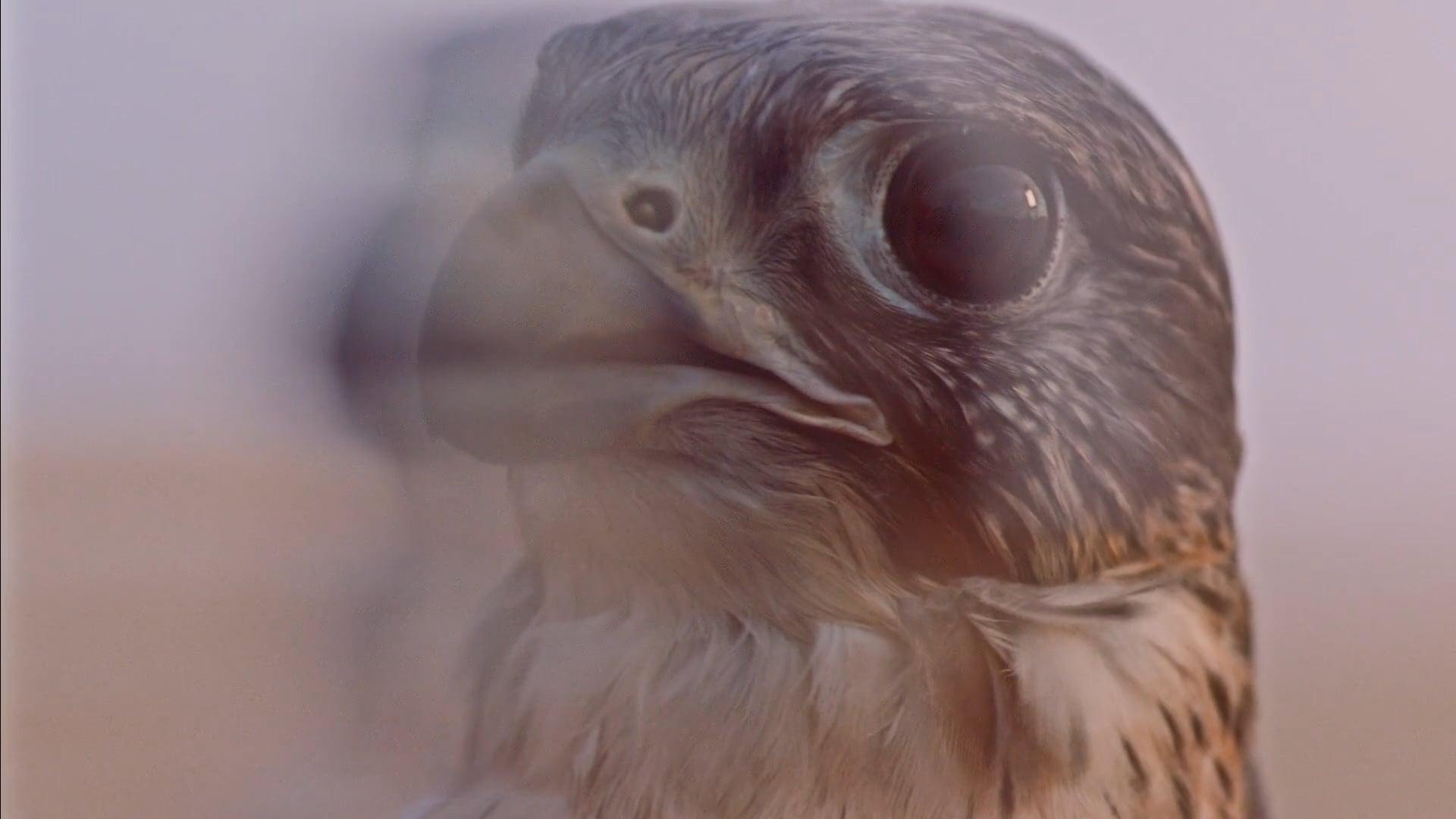 Etihad Airways - Music Video - Falcon