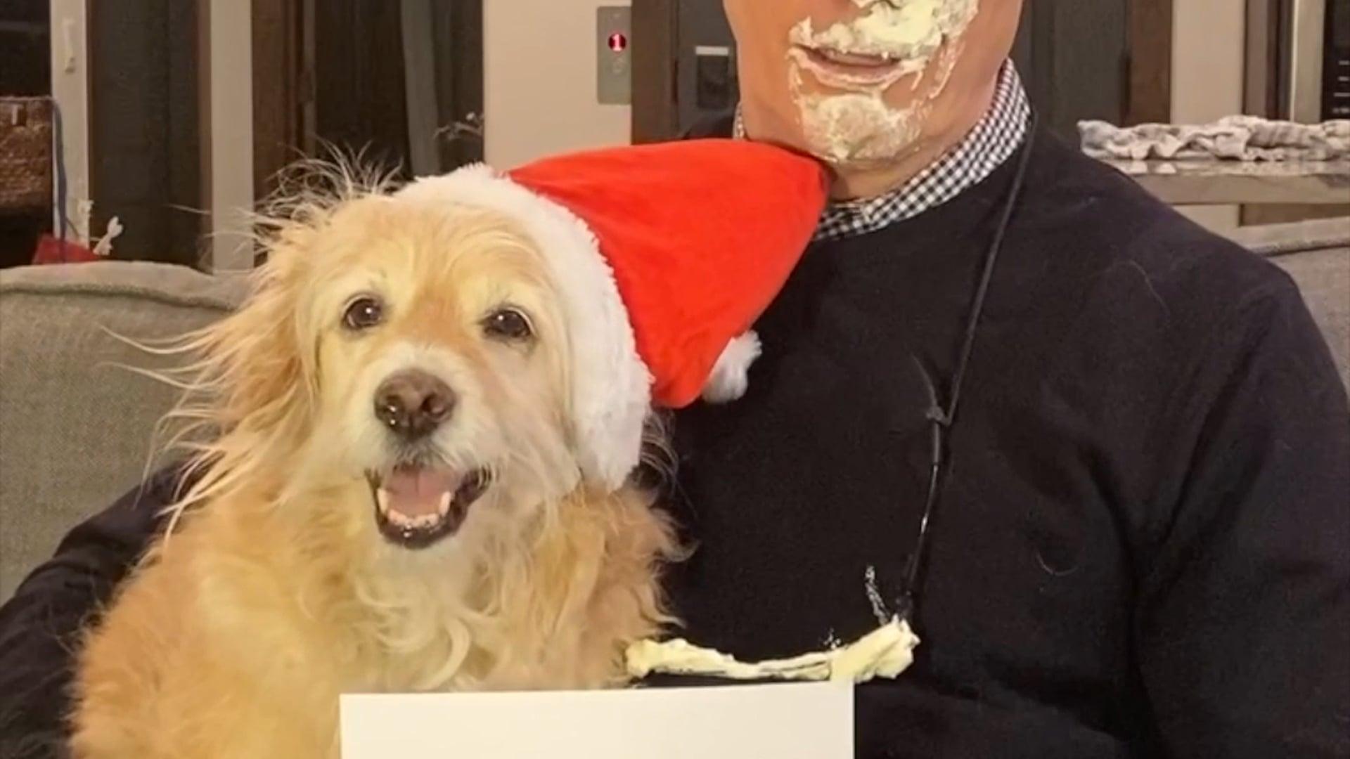 A Very Bruce Christmas