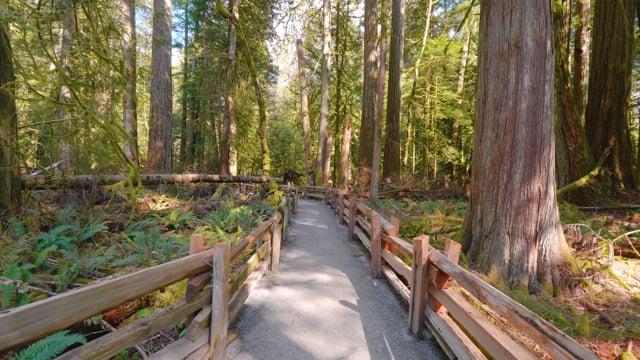 Incredible Nature of British Columbia, Canada - 4K Nature Walking Tour - Short Version