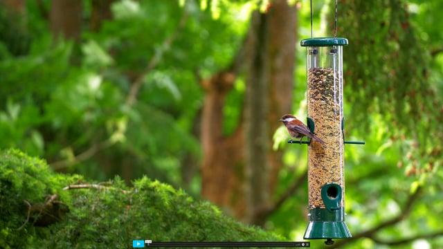 4K Wildlife/Birds - 1.5 Hours of Relaxing Birds Singing Nature Sounds - Birds at Feeders