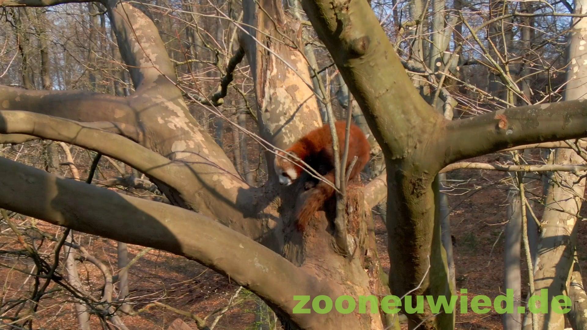 Werbespot Zoo Neuwied