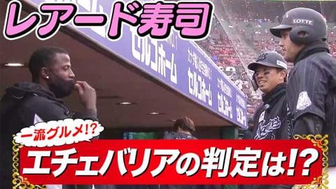 【レアード寿司】レアードカットボール捌いて寿司握る【お味は?】