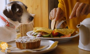 Your pups can enjoy fine dining at these hotels!