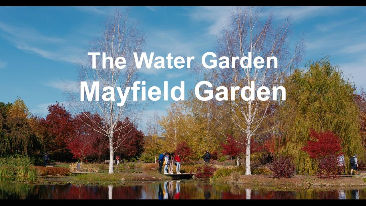 Mayfield Garden - The Water Garden