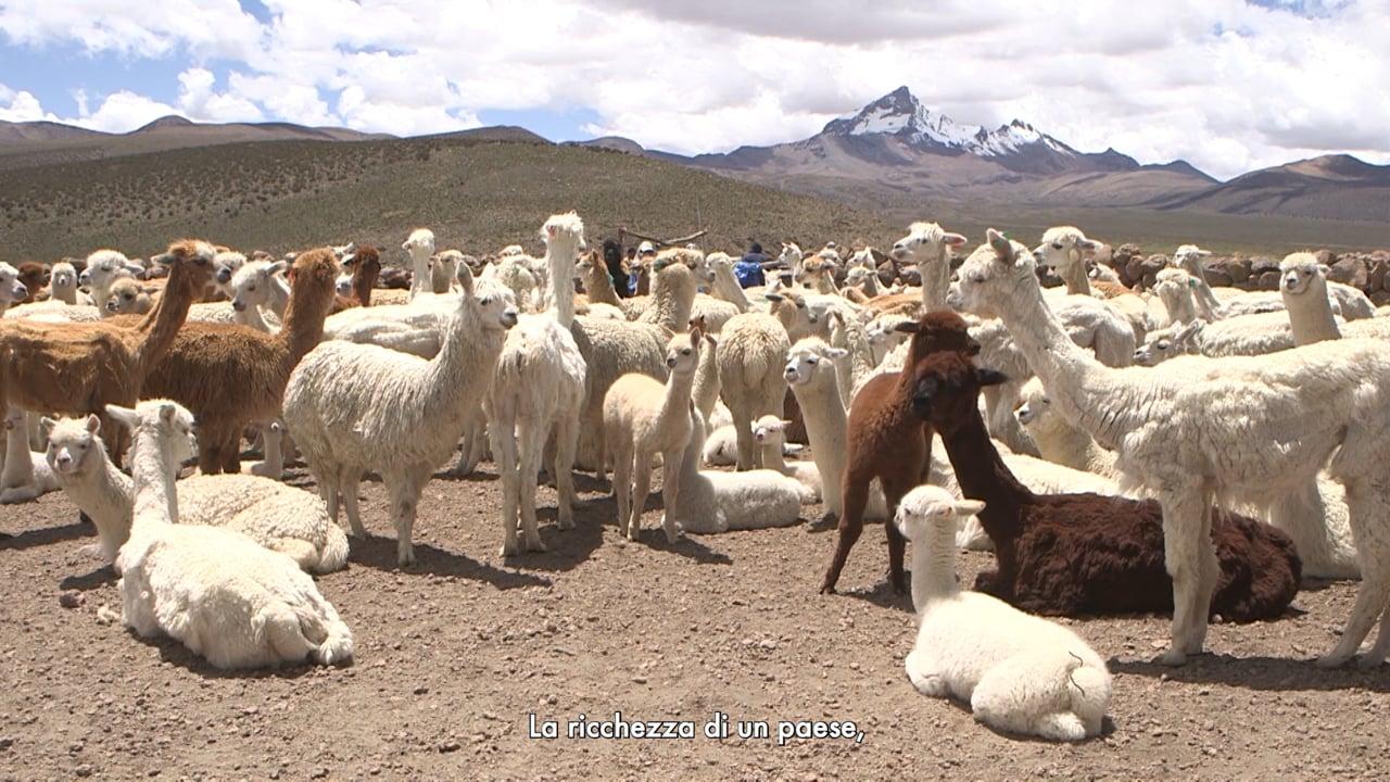 Trailer Le custodi dell'oro delle Ande