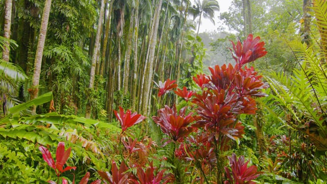 Rain in Tropical Forest - Nature Relax Video. Part 2