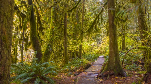 Amazing Forests of the United States - Incredible Forest Ambience
