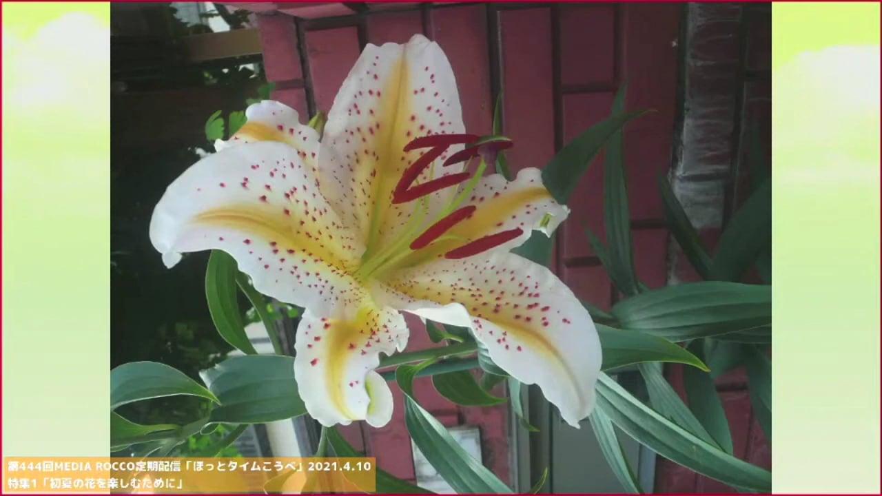 第444回MEDIA ROCCO定期配信 特集1「初夏の花を楽しむために」 2021.4.17