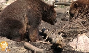 Some people think they could take on a grizzly bear!