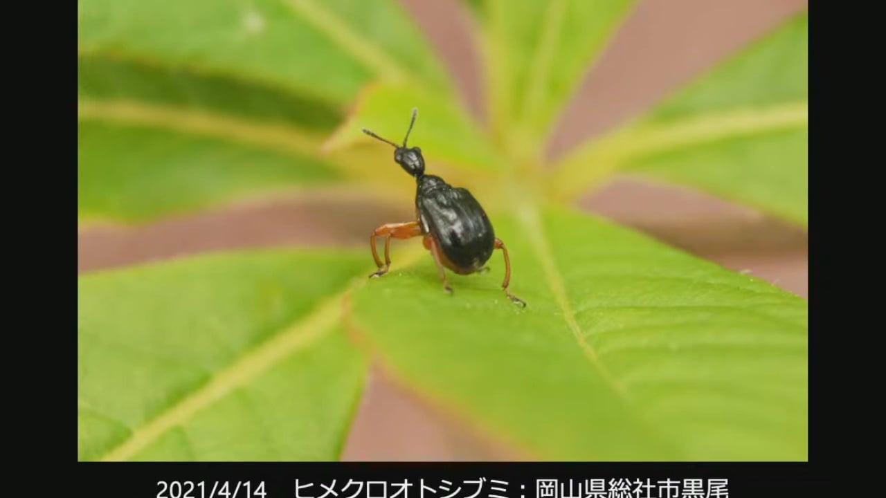 第447回MEDIA ROCCO定期配信 特集1「春の昆虫特集 そーっと小さな生き物たちに近づいてみよう」 2021.5.1(1/2)