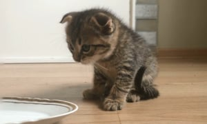 Kitten takes a ride through a car wash after getting stuck in a car chassis!