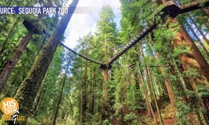 Take a trip in the Redwood Forest 100 feet in the air!