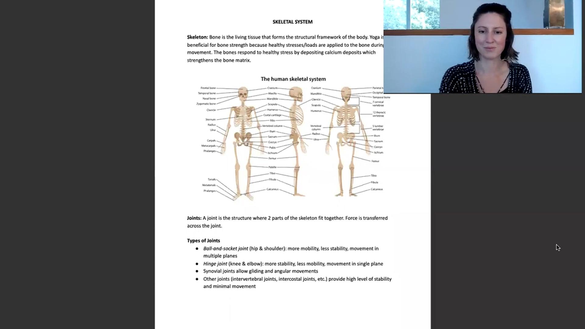 """10 min """"Skeletal System"""" Lecture Workshop"""